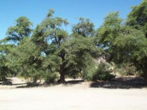 Oak Flat CG